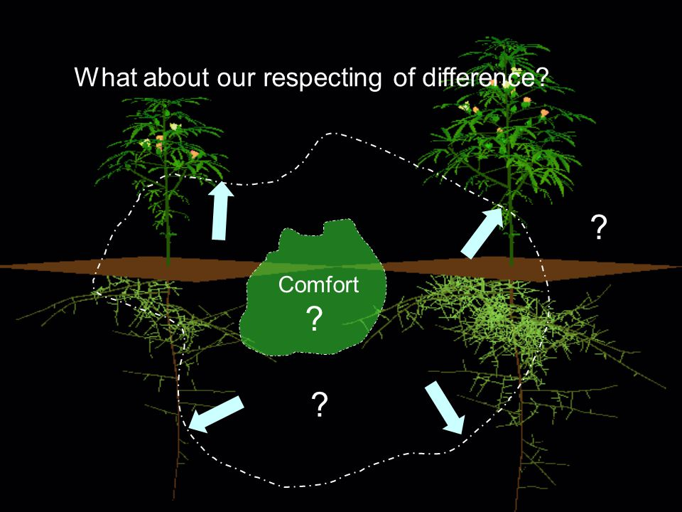 What about our respecting of difference Comfort