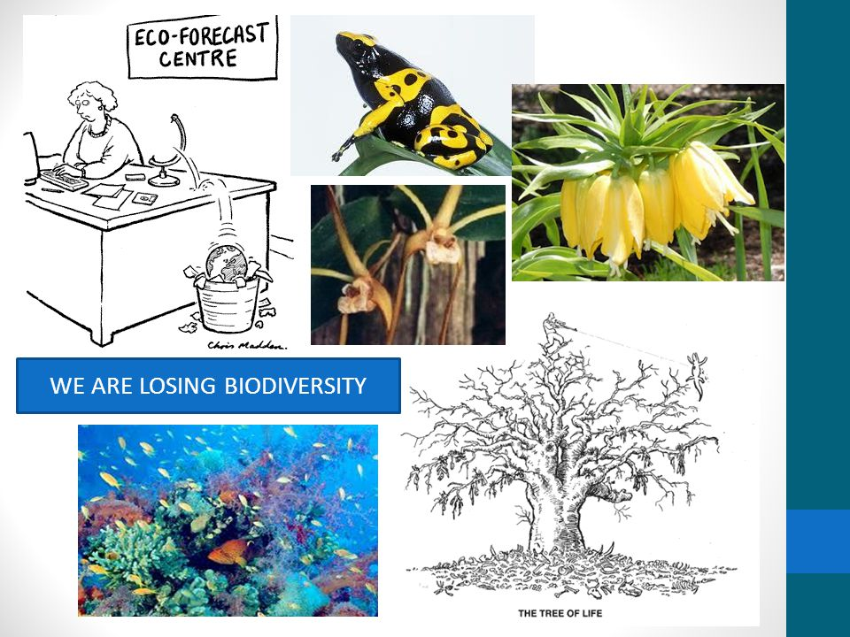 WE ARE LOSING BIODIVERSITY