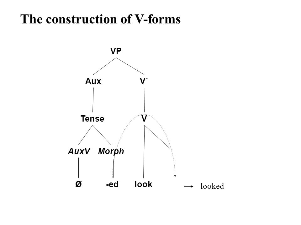 VP AuxV´ Tense AuxV Ø V look The construction of V-forms Morph -ed looked