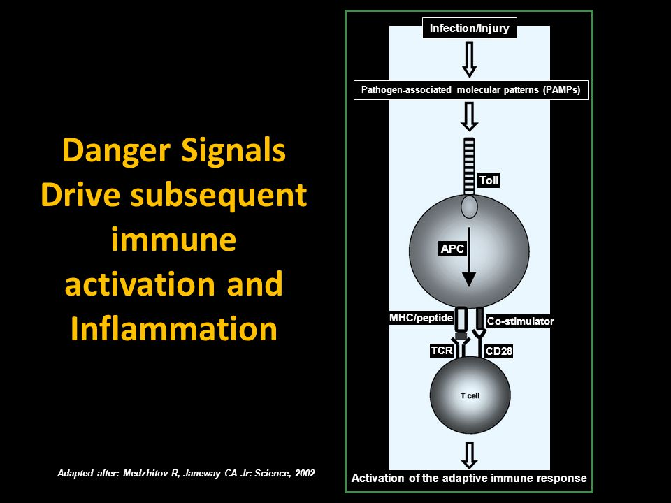 Adapted after: Medzhitov R, Janeway CA Jr: Science, 2002 Danger Signals Drive subsequent immune activation and Inflammation Infection/Injury Pathogen-
