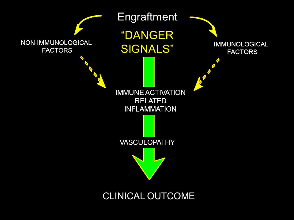"IMMUNOLOGICAL FACTORS CLINICAL OUTCOME Engraftment ""Danger Signals"" IMMUNE ACTIVATION RELATED INFLAMMATION NON-IMMUNOLOGICAL FACTORS VASCULOPATHY ""DAN"