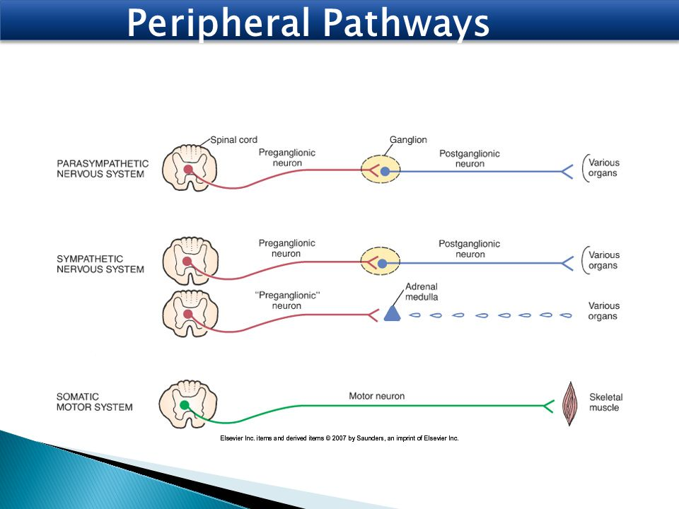 Peripheral Pathways