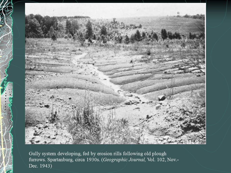 Gully system developing, fed by erosion rills following old plough furrows. Spartanburg, circa 1930s. (Geographic Journal, Vol. 102, Nov.- Dec. 1943)
