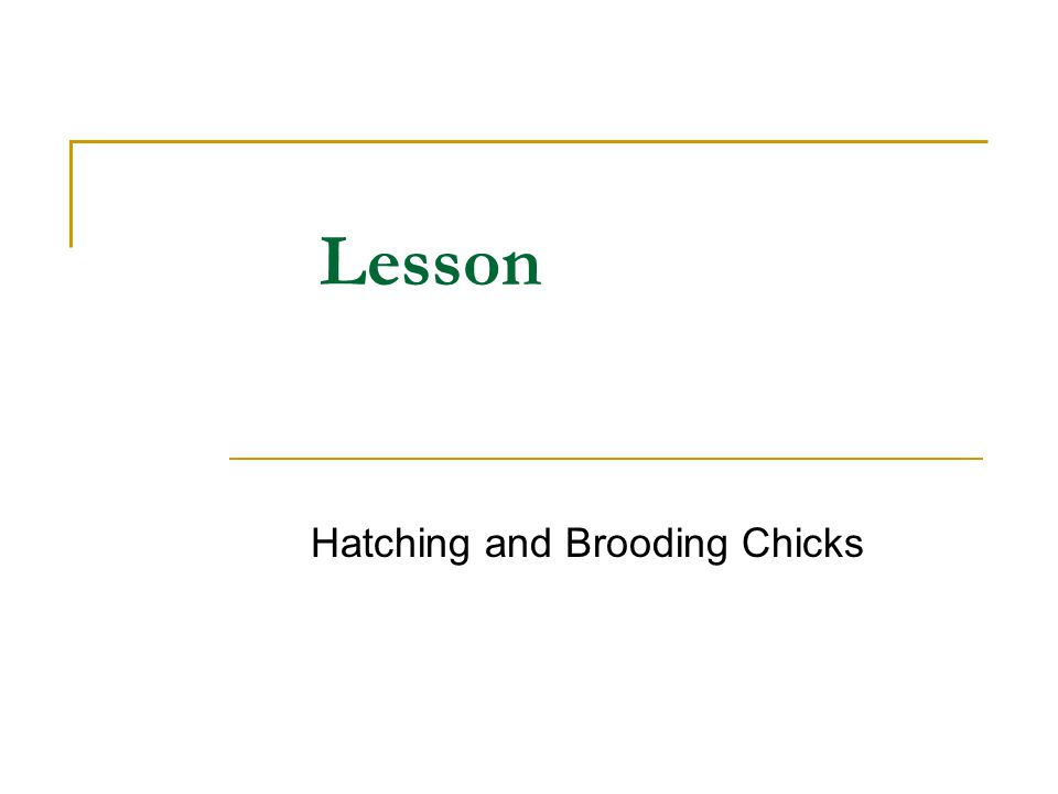 Student Learning Objectives 1.Describe the embryonic development of a chicken.