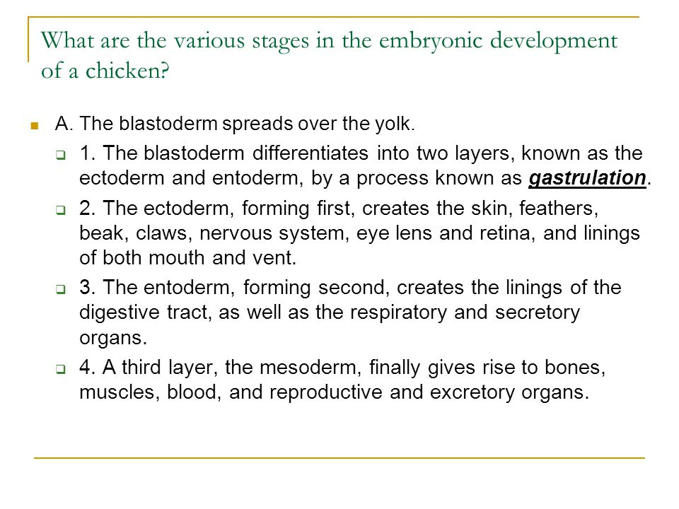 B.Membranes cover the developing embryo for protection and aid in development.