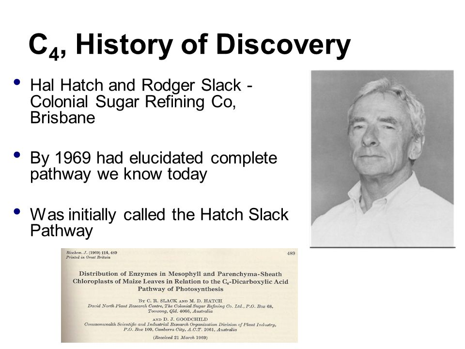 C 4, History of Discovery Hal Hatch and Rodger Slack - Colonial Sugar Refining Co, Brisbane By 1969 had elucidated complete pathway we know today Was initially called the Hatch Slack Pathway