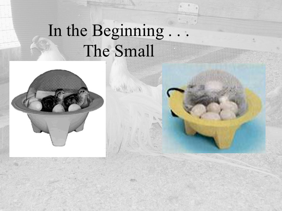 In the Beginning... The Small