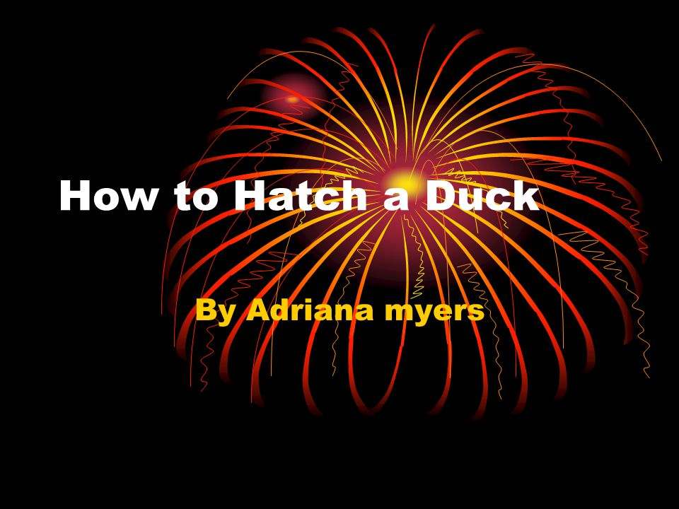 How to Hatch a Duck By Adriana myers