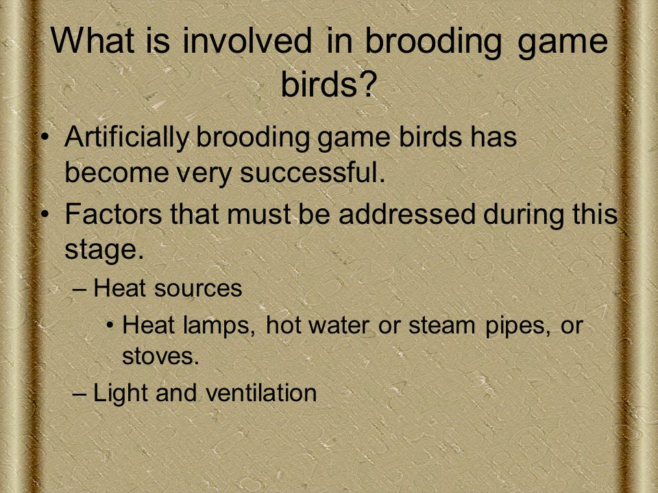What is involved in brooding game birds.
