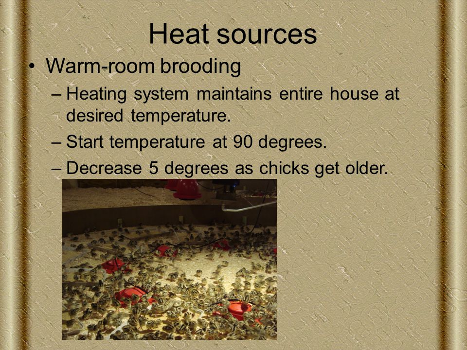 Heat sources Warm-room brooding –Heating system maintains entire house at desired temperature.
