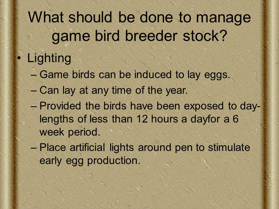 What should be done to manage game bird breeder stock.