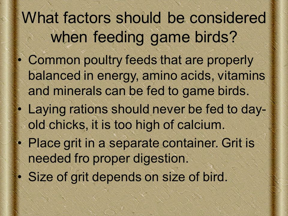 What factors should be considered when feeding game birds.