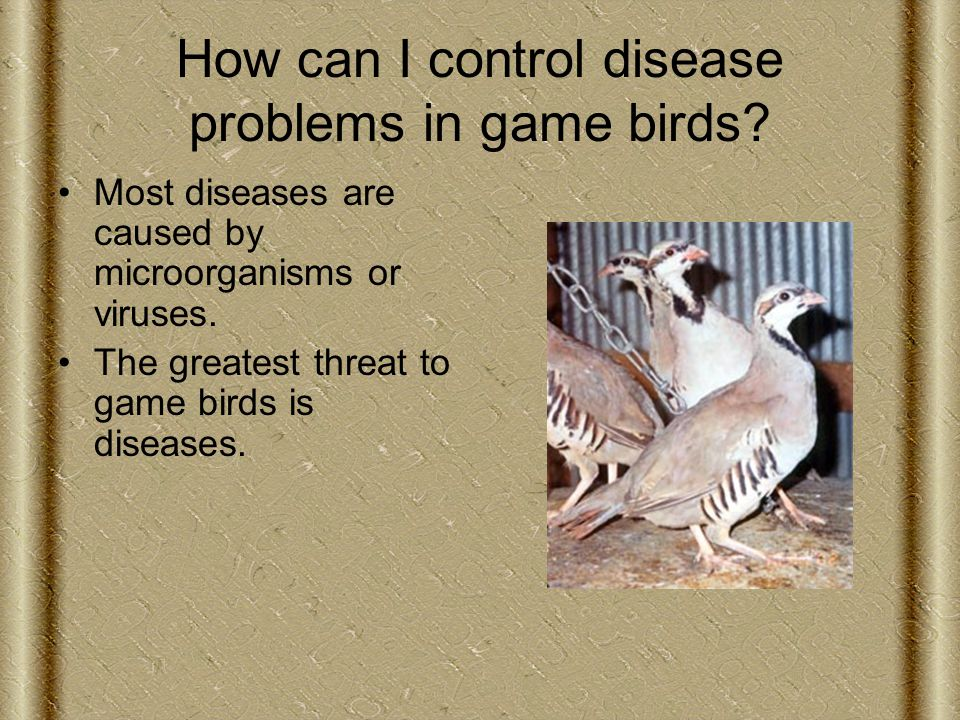 How can I control disease problems in game birds.