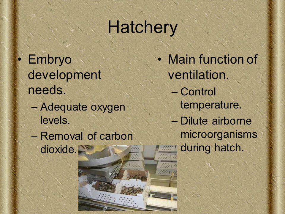 Hatchery Embryo development needs. –Adequate oxygen levels.