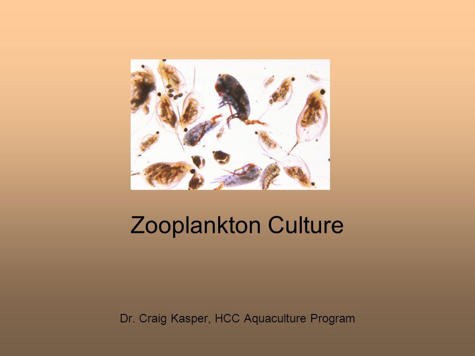Zooplankton Culture Dr. Craig Kasper, HCC Aquaculture Program