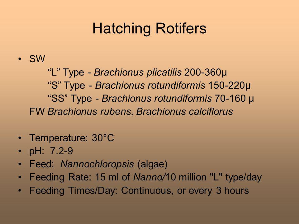 "Hatching Rotifers SW ""L"" Type - Brachionus plicatilis 200-360μ ""S"" Type - Brachionus rotundiformis 150-220μ ""SS"" Type - Brachionus rotundiformis 70-16"