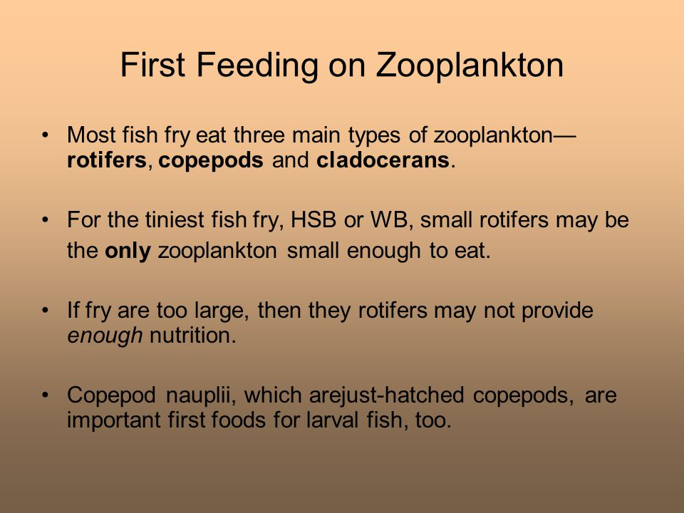 First Feeding on Zooplankton Most fish fry eat three main types of zooplankton— rotifers, copepods and cladocerans. For the tiniest fish fry, HSB or W