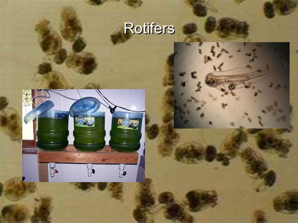Rotifer (0.04 -2.5 mm long).Sim. to microalgae.