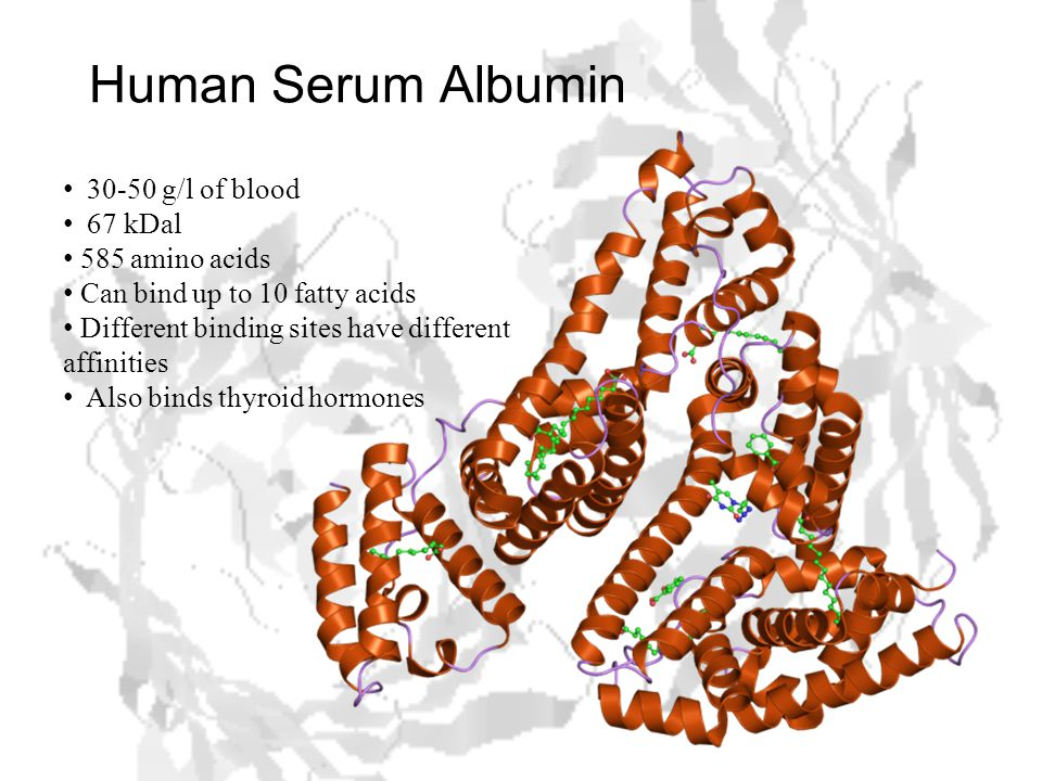 Human Serum Albumin 30-50 g/l of blood 67 kDal 585 amino acids Can bind up to 10 fatty acids Different binding sites have different affinities Also binds thyroid hormones