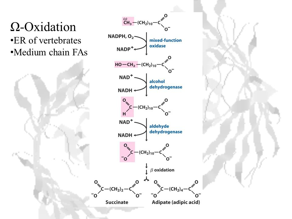 Ω-Oxidation ER of vertebrates Medium chain FAs
