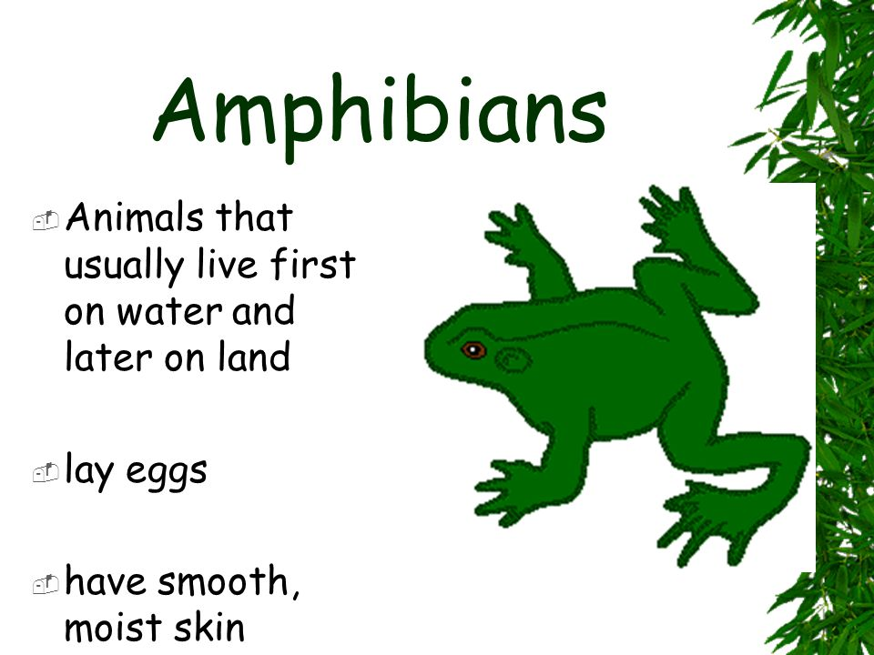 Reptiles  land animals that have scales  dry, bumpy skin  have lungs for breathing  hatches from eggs