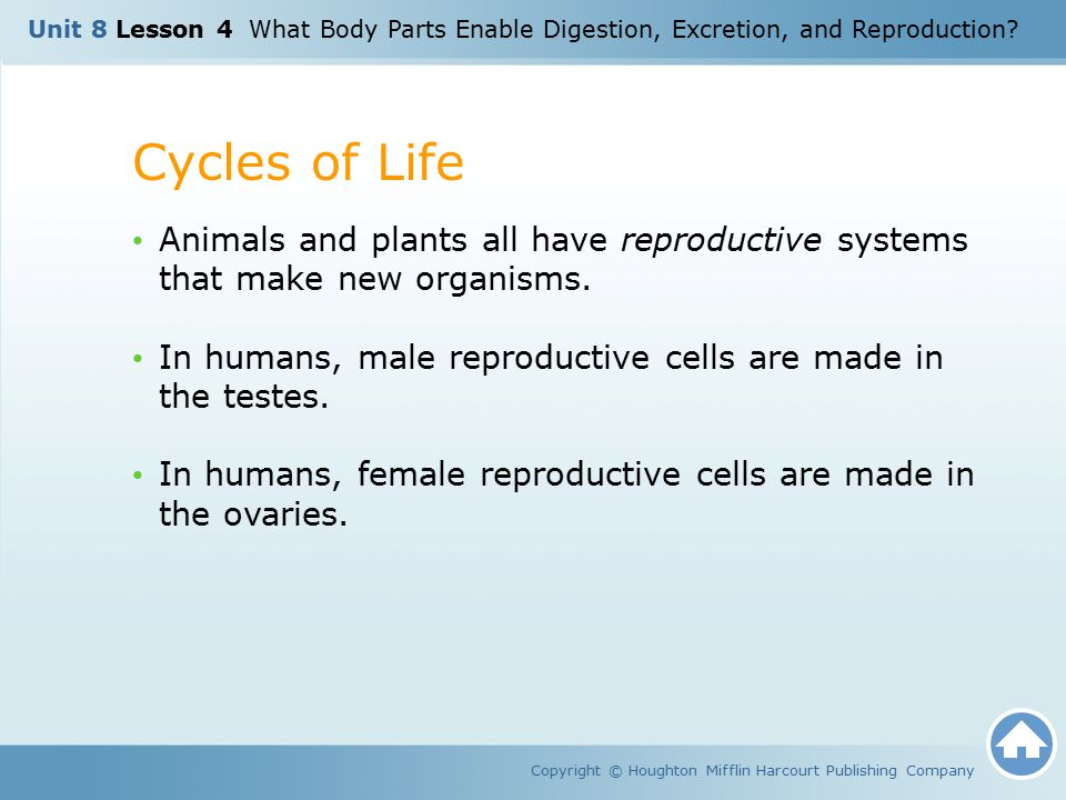 Cycles of Life Copyright © Houghton Mifflin Harcourt Publishing Company Animals and plants all have reproductive systems that make new organisms. In h