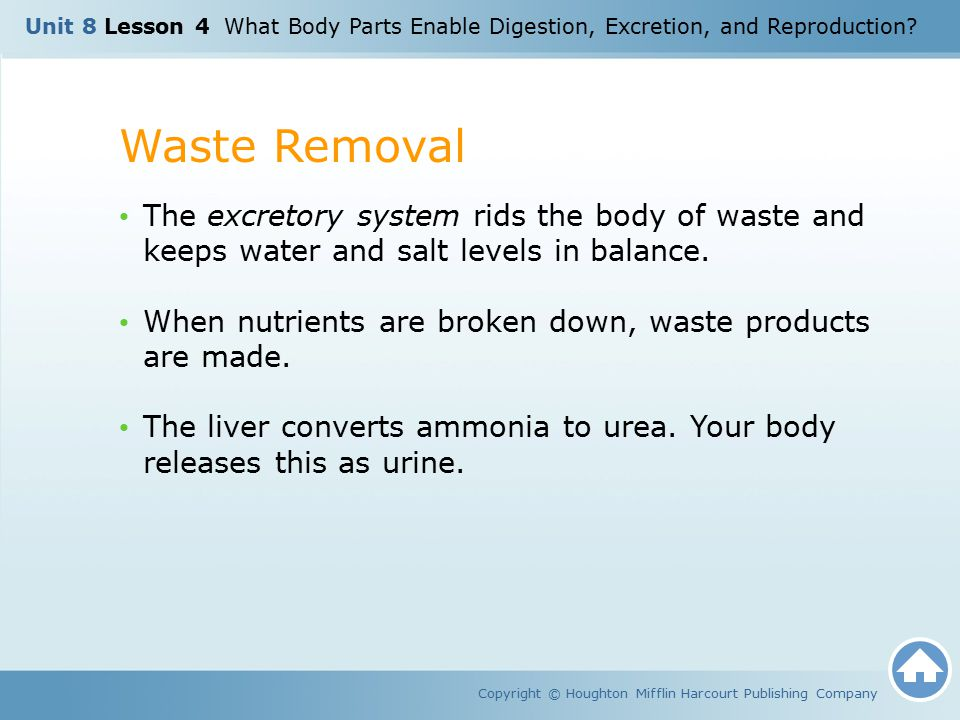 Waste Removal Copyright © Houghton Mifflin Harcourt Publishing Company The excretory system rids the body of waste and keeps water and salt levels in