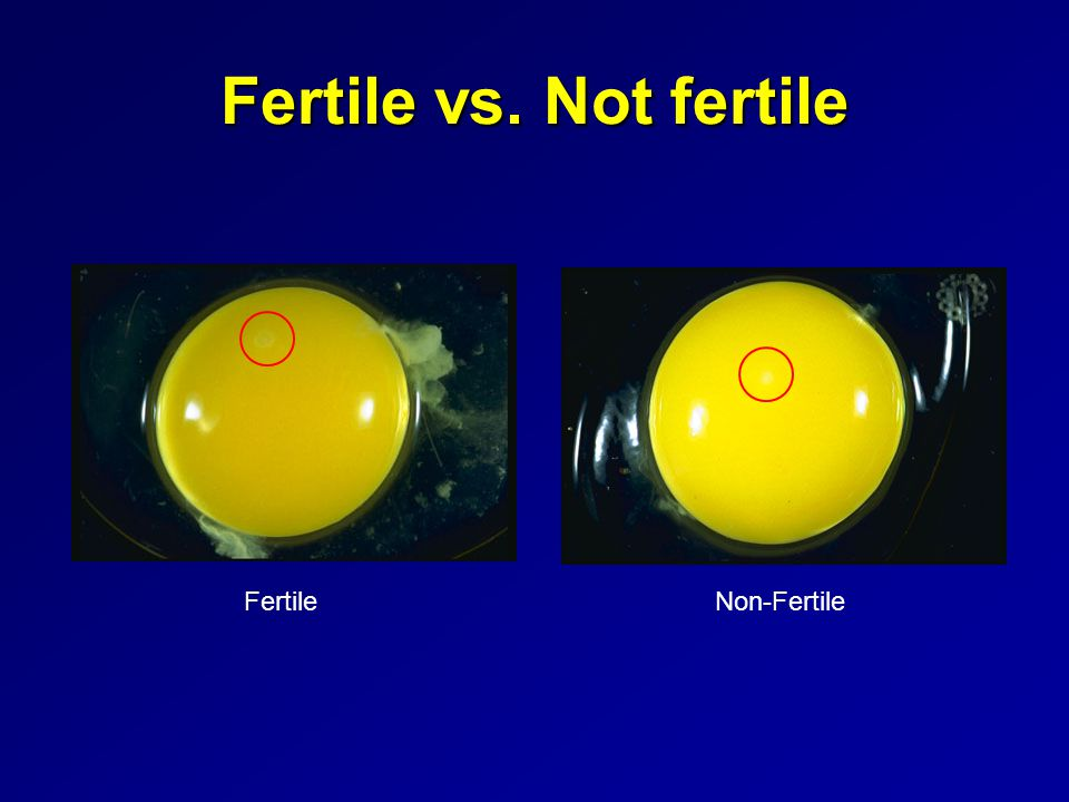 Fertile vs. Not fertile FertileNon-Fertile