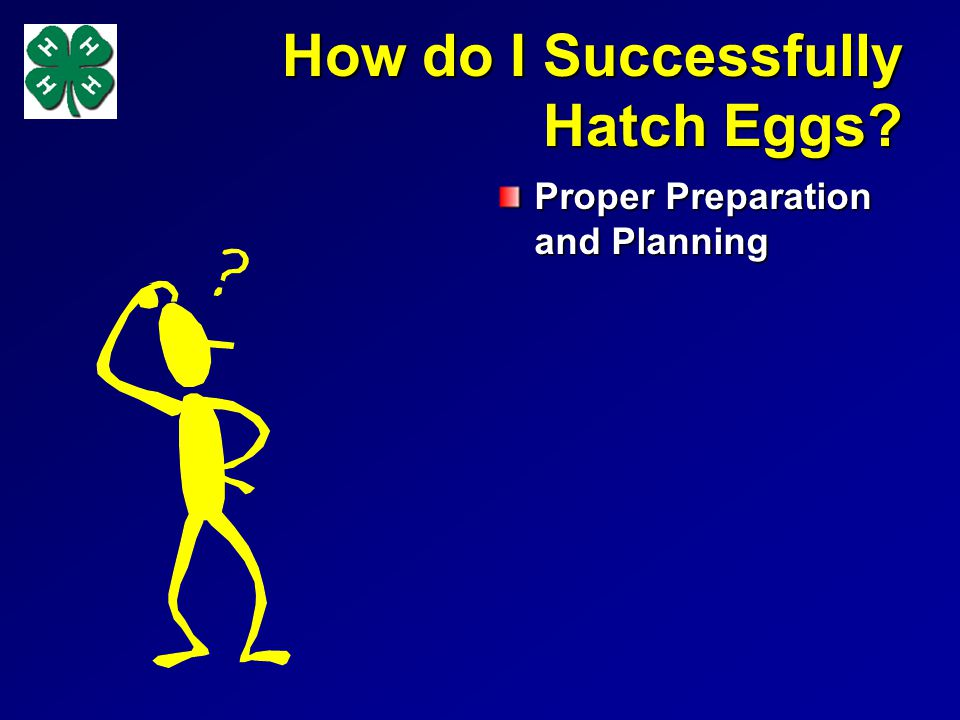 How do I Successfully Hatch Eggs Proper Preparation and Planning