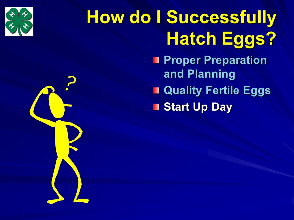 How do I Successfully Hatch Eggs Proper Preparation and Planning Quality Fertile Eggs Start Up Day