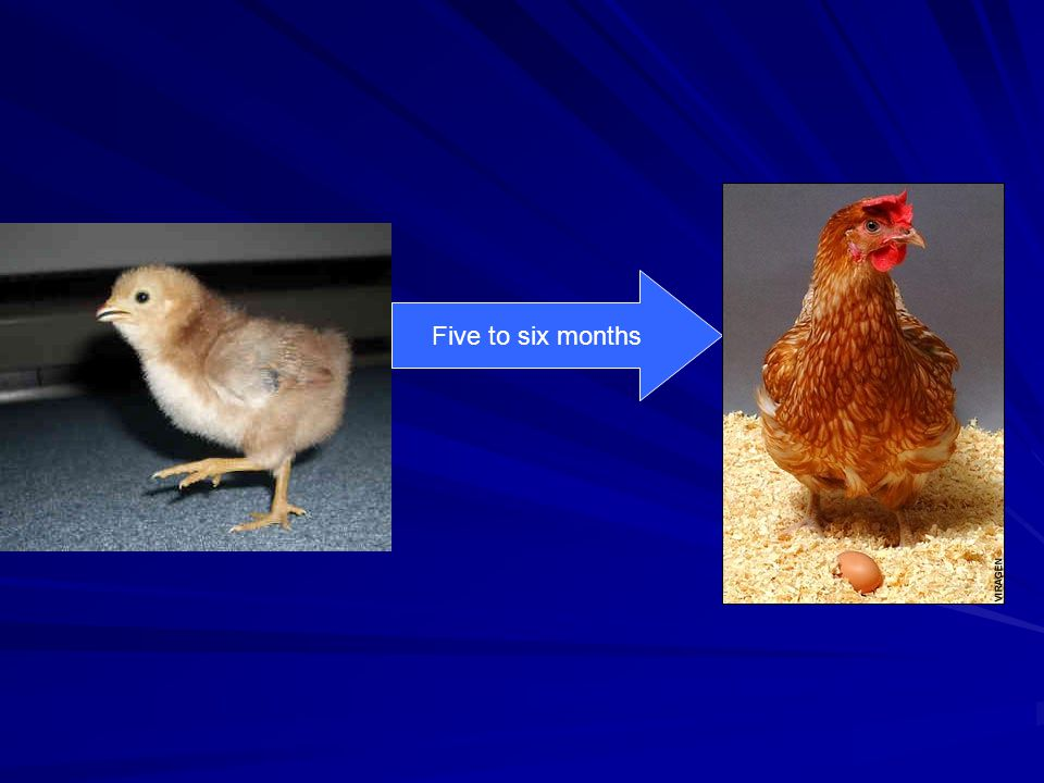 Low Temperature can cause: Eggs pipped, but chicks dead in shell.