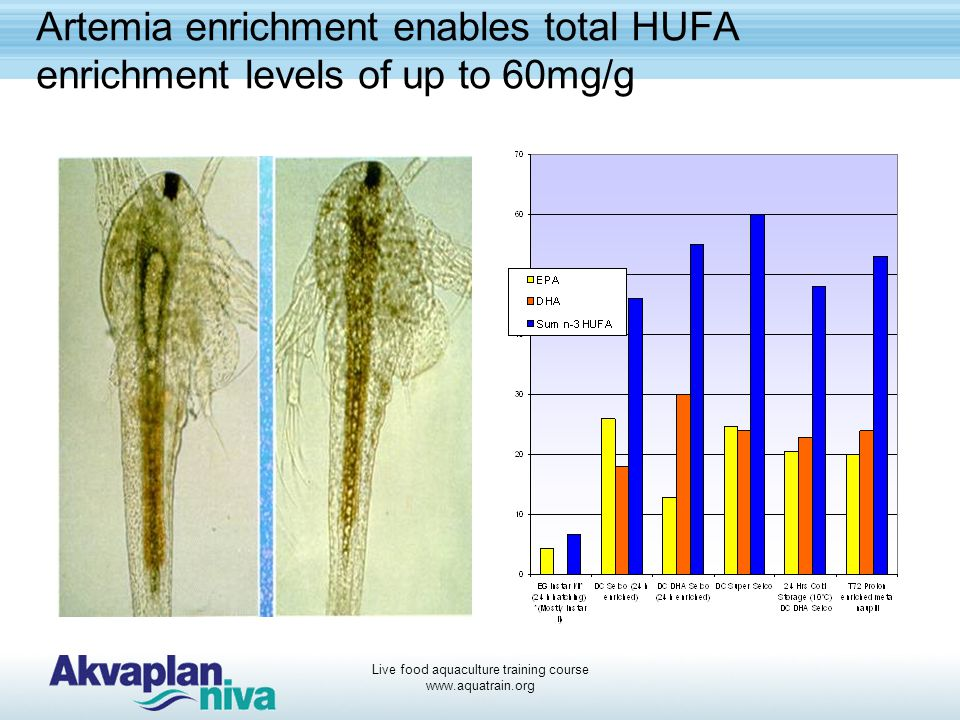Live food aquaculture training course www.aquatrain.org Artemia enrichment enables total HUFA enrichment levels of up to 60mg/g