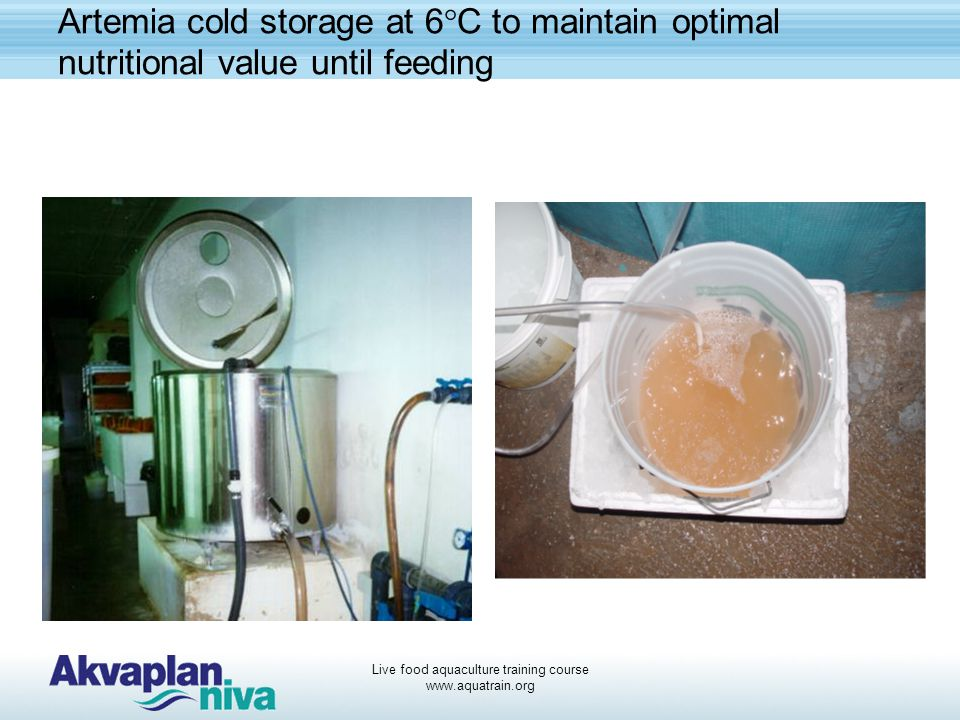 Live food aquaculture training course www.aquatrain.org Artemia cold storage at 6°C to maintain optimal nutritional value until feeding