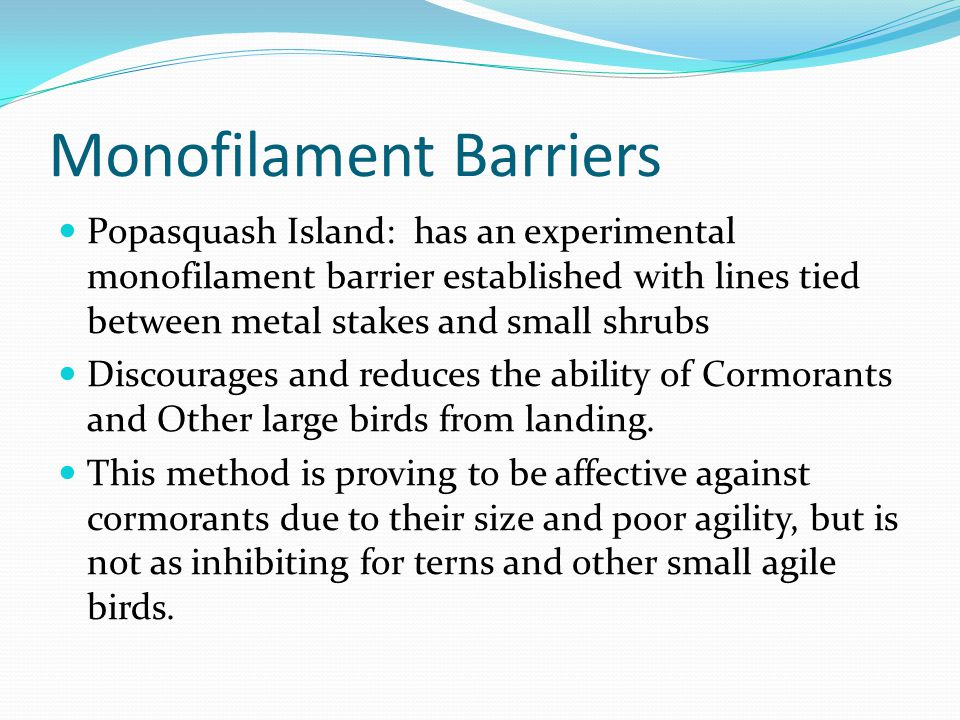 Monofilament Barriers Popasquash Island: has an experimental monofilament barrier established with lines tied between metal stakes and small shrubs Di