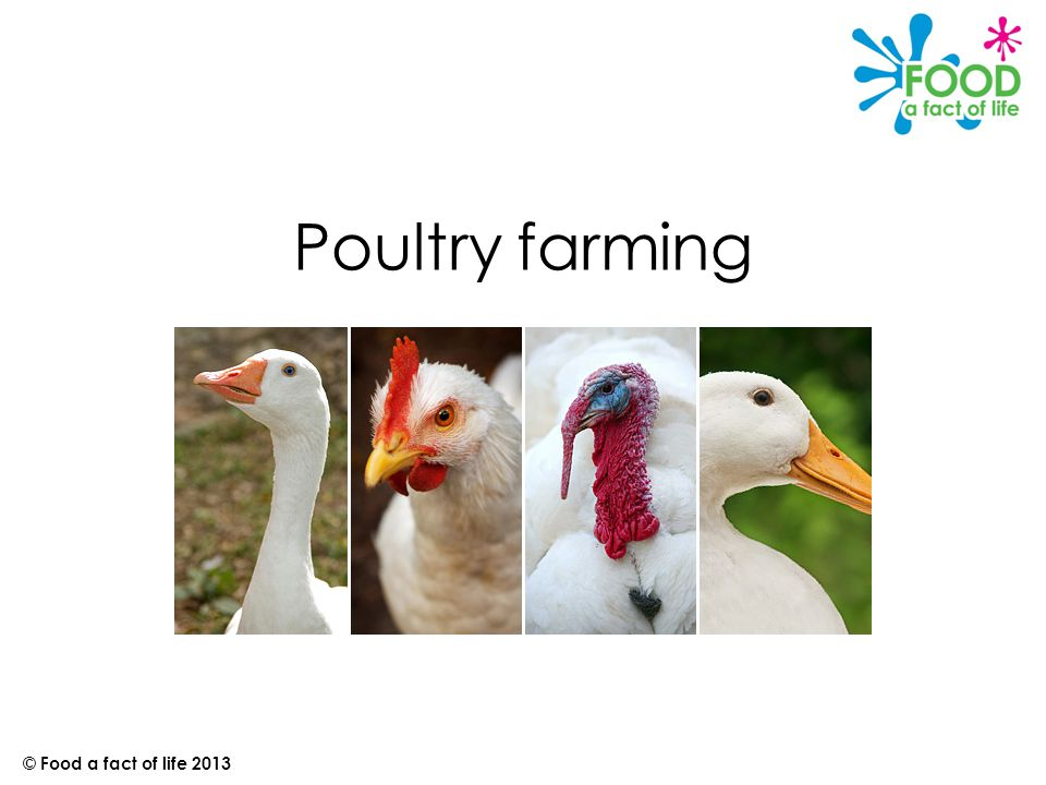 Poultry farming © Food a fact of life 2013