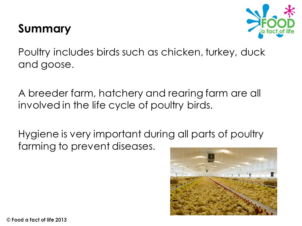 Summary Poultry includes birds such as chicken, turkey, duck and goose.