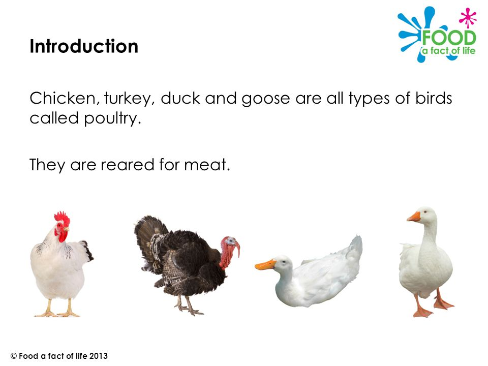 Introduction to chicken farming Chickens farmed for meat are called broiler chickens.