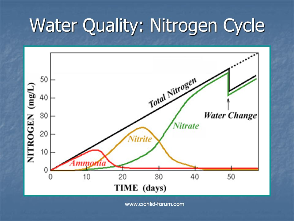 Water Quality: Nitrogen Cycle www.cichlid-forum.com