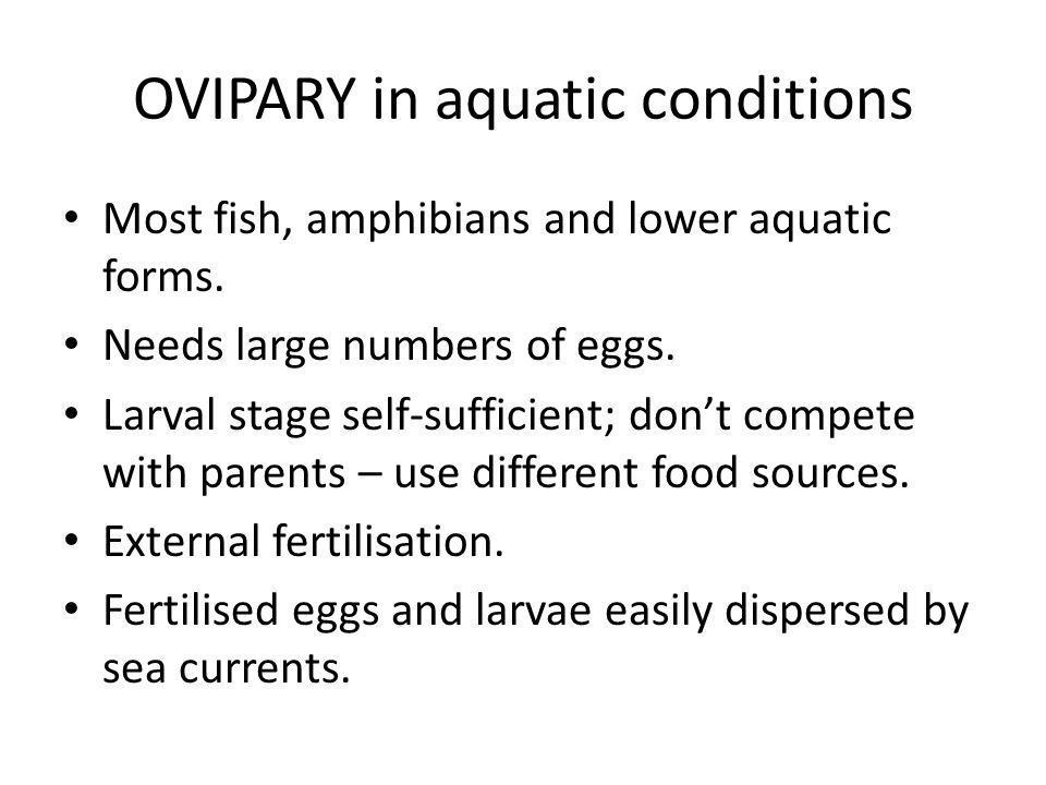 Most fish, amphibians and lower aquatic forms. Needs large numbers of eggs. Larval stage self-sufficient; don't compete with parents – use different f
