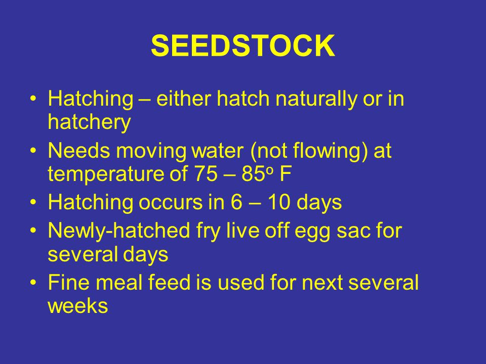 SEEDSTOCK Hatching – either hatch naturally or in hatchery Needs moving water (not flowing) at temperature of 75 – 85 o F Hatching occurs in 6 – 10 days Newly-hatched fry live off egg sac for several days Fine meal feed is used for next several weeks