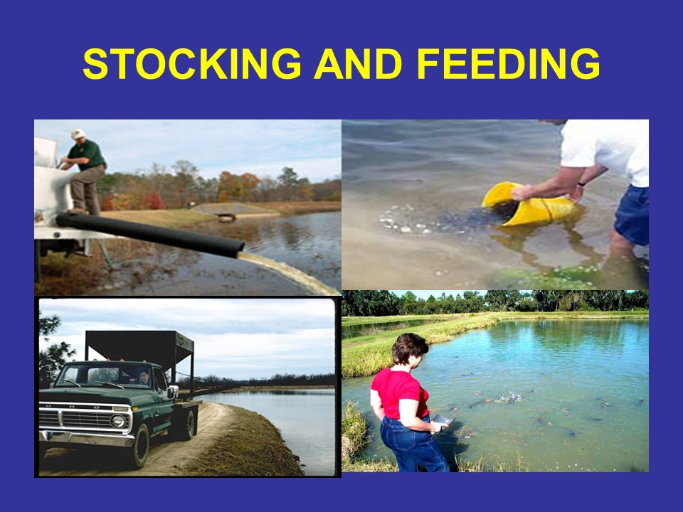 STOCKING AND FEEDING