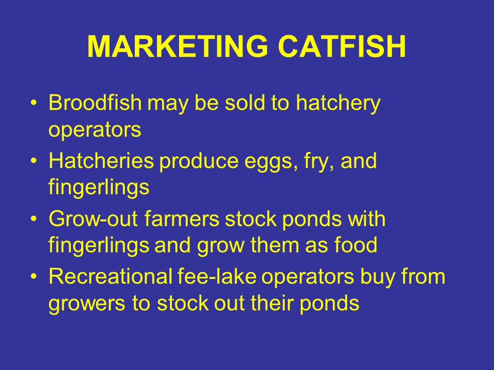 MARKETING CATFISH Broodfish may be sold to hatchery operators Hatcheries produce eggs, fry, and fingerlings Grow-out farmers stock ponds with fingerli