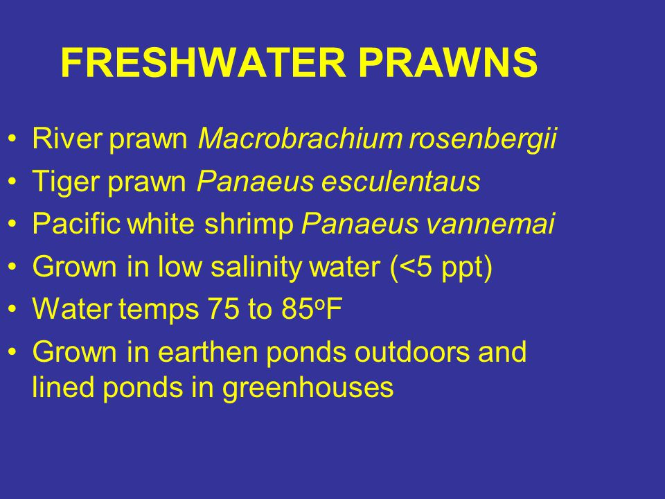 FRESHWATER PRAWNS River prawn Macrobrachium rosenbergii Tiger prawn Panaeus esculentaus Pacific white shrimp Panaeus vannemai Grown in low salinity wa
