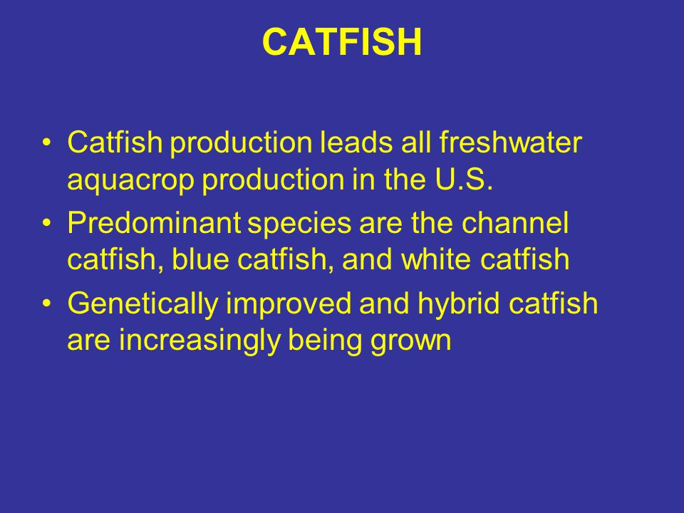 CATFISH Catfish production leads all freshwater aquacrop production in the U.S. Predominant species are the channel catfish, blue catfish, and white c