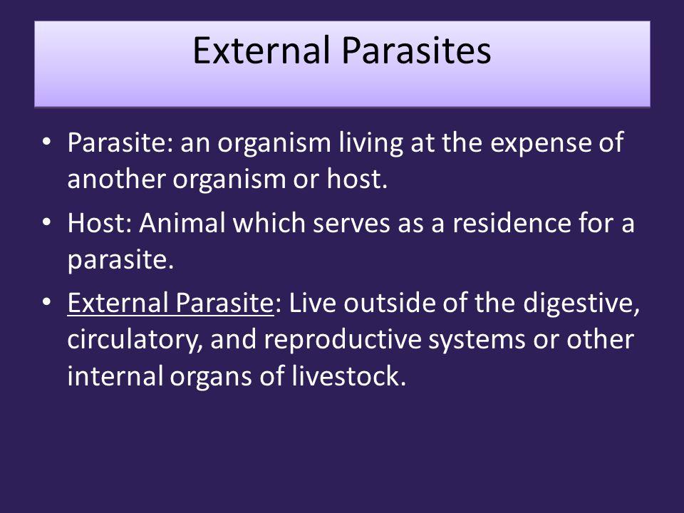 External Parasites Types of External Parasites Ticks Mites Flies Lice Bots