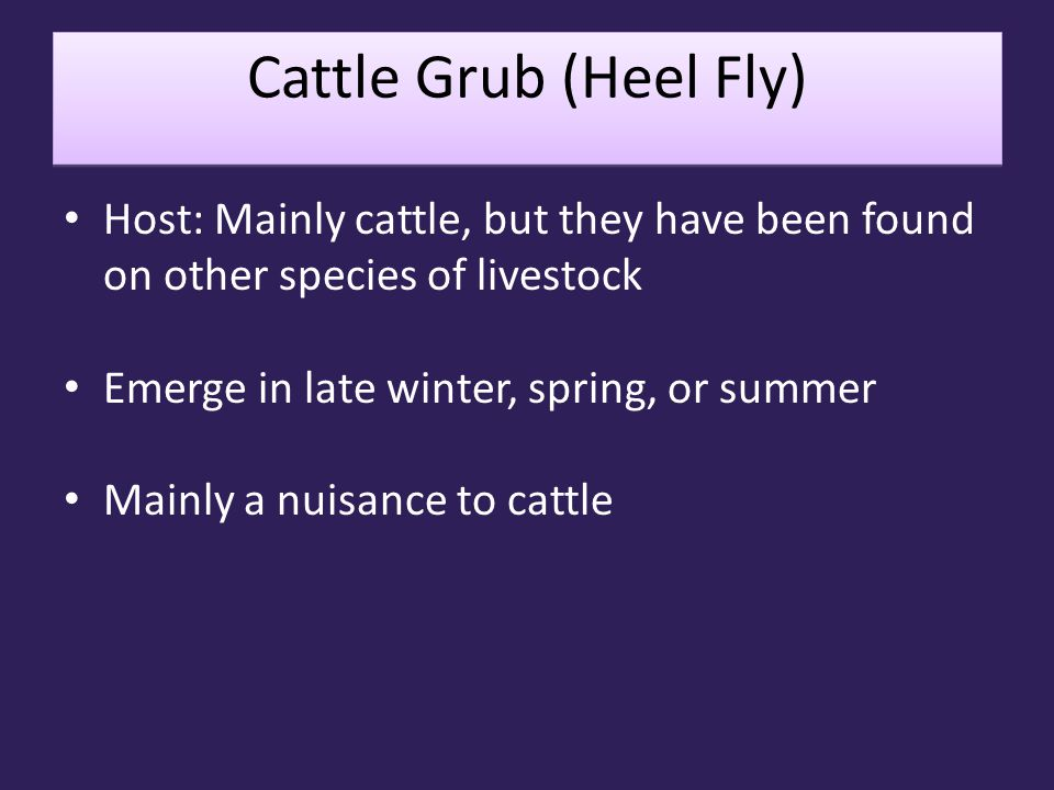 Cattle Grub (Heel Fly) Host: Mainly cattle, but they have been found on other species of livestock Emerge in late winter, spring, or summer Mainly a n