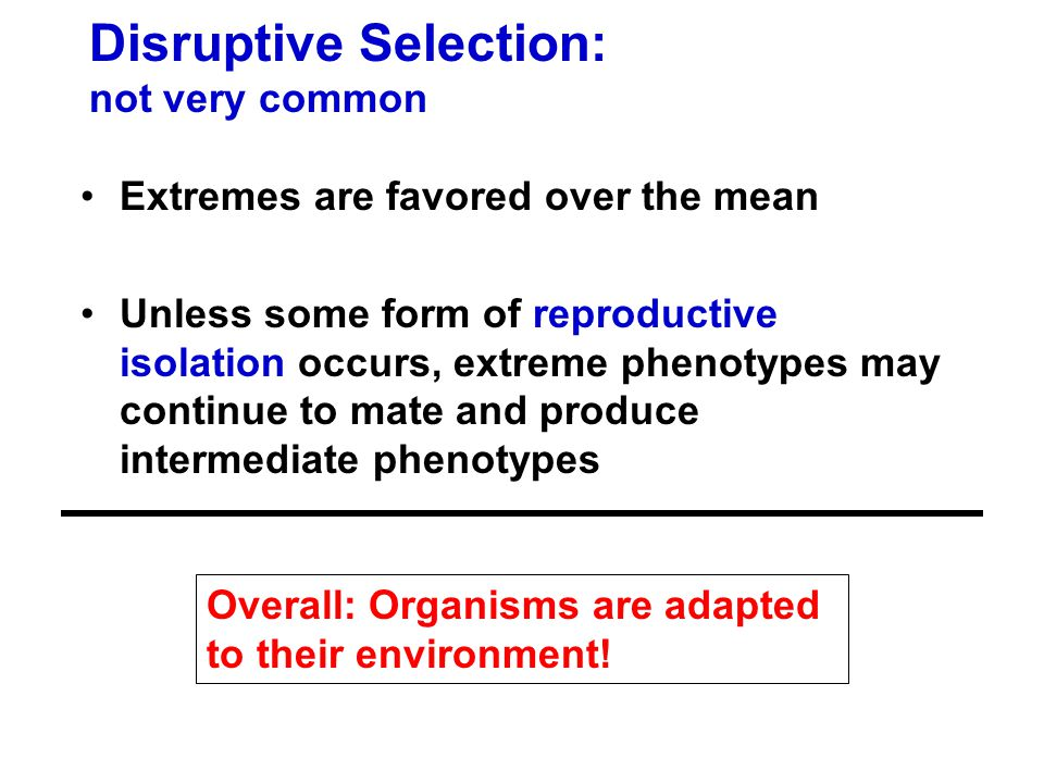 Disruptive Selection: not very common Extremes are favored over the mean Unless some form of reproductive isolation occurs, extreme phenotypes may continue to mate and produce intermediate phenotypes Overall: Organisms are adapted to their environment!