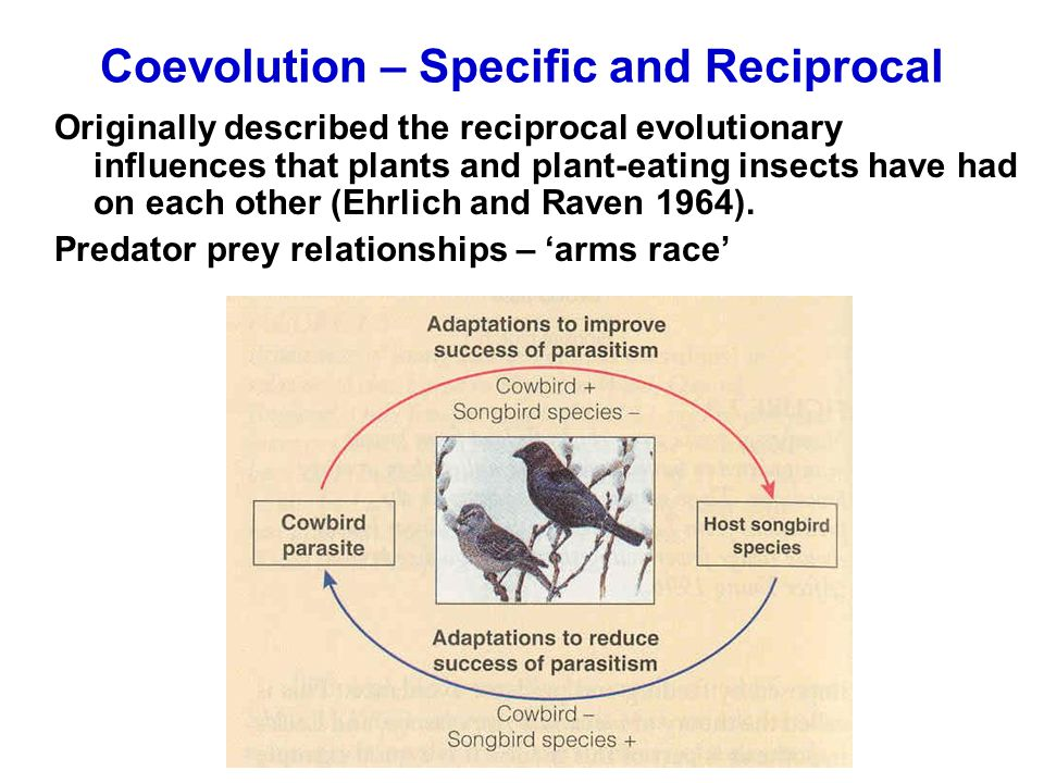 Coevolution – Specific and Reciprocal Originally described the reciprocal evolutionary influences that plants and plant-eating insects have had on eac