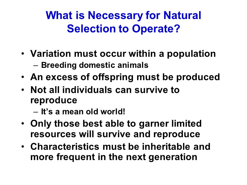 What is Necessary for Natural Selection to Operate? Variation must occur within a population –Breeding domestic animals An excess of offspring must be