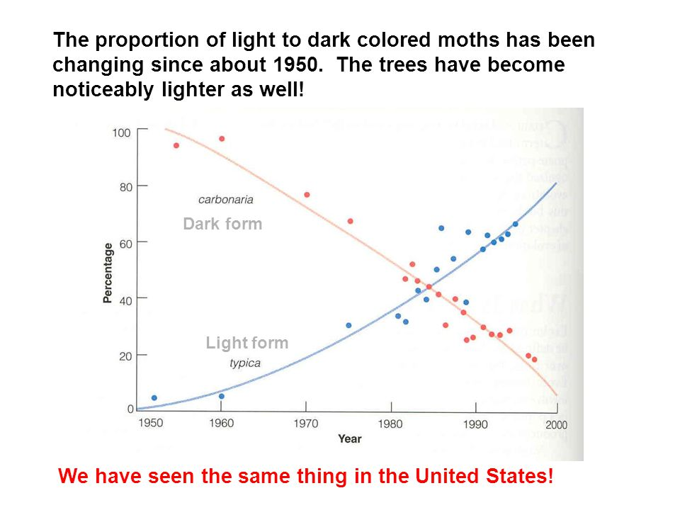 Dark form Light form The proportion of light to dark colored moths has been changing since about 1950.